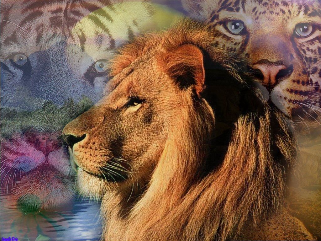 trop beau le lion lion trop beau. Black Bedroom Furniture Sets. Home Design Ideas