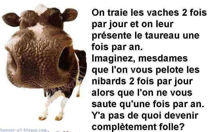 Parole d 39 une vache centerblog - Photo de vache drole ...